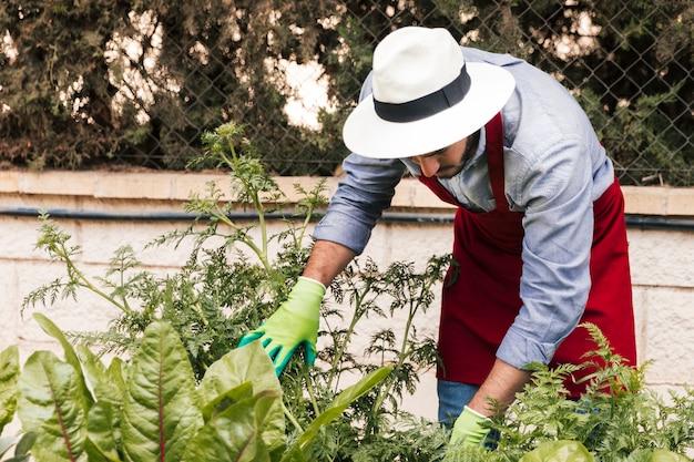 庭の植物を調べる彼の頭の上に帽子をかぶっている男性庭師