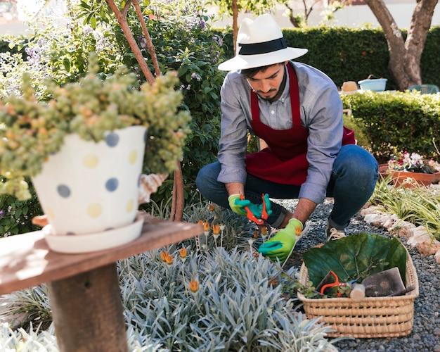 男性庭師が庭で収穫した花を切る