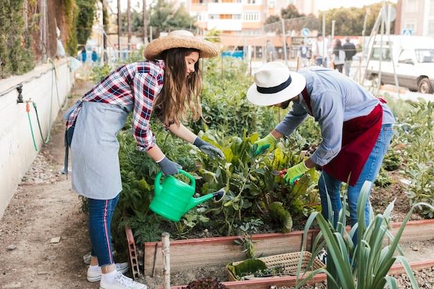 男性と女性の庭師トリミングと庭の植物の水やりのクローズアップ