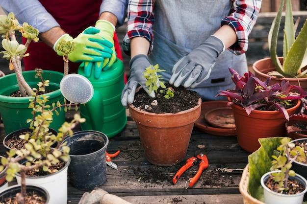 Садовник сажает растения в горшке