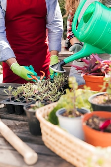 Крупный план мужского и женского садовника обрезки и полива растений в домашнем саду