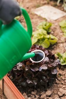 Крупный план садовника полива растений с зеленой лейкой