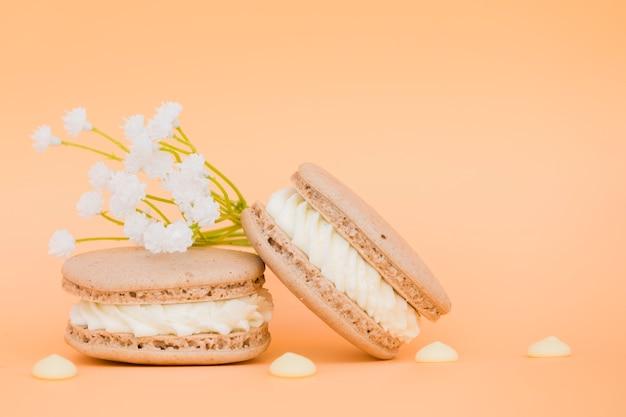 色付きの背景にマカロンの近くの白い花