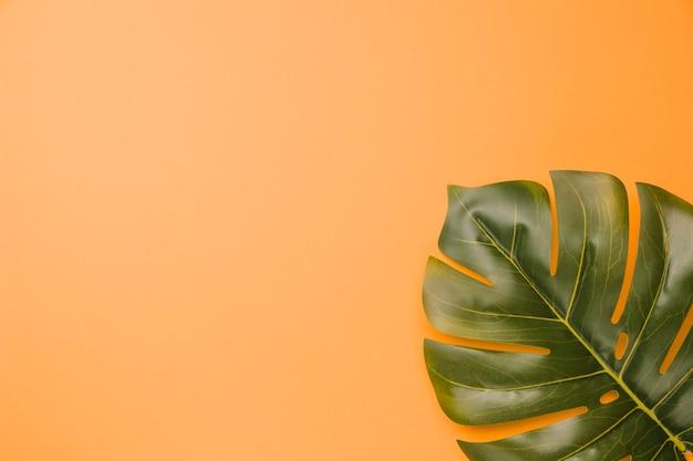 緑のモンステラ植物の葉の組成