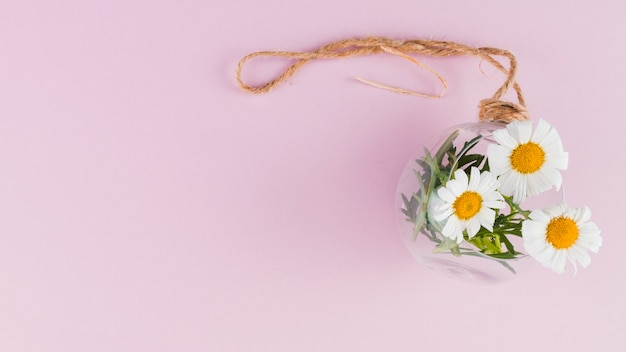 花瓶のトップビューデイジー