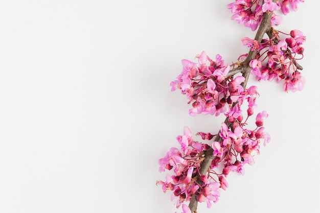 Вид сверху цветы с копией пространства