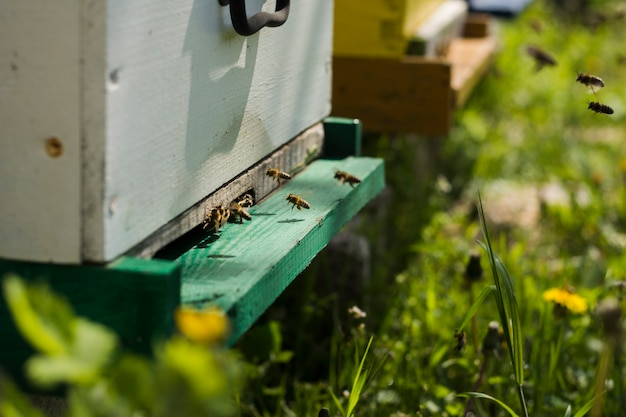 蜂蜜農場の風景