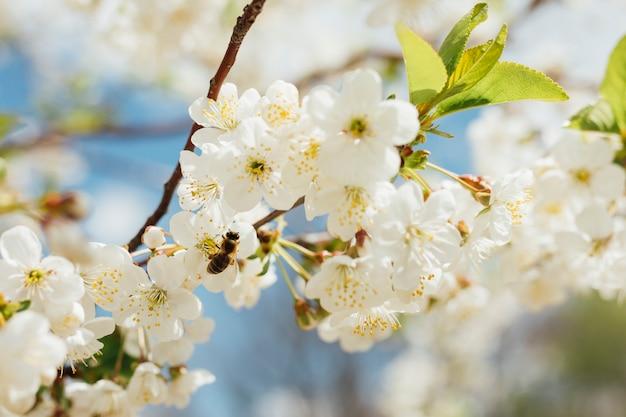 枝に白い花