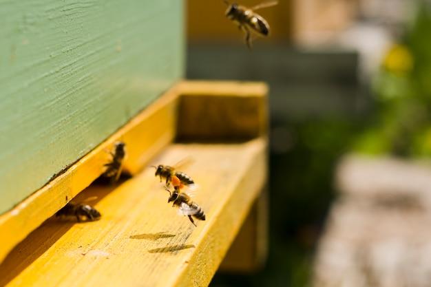 木の上の蜂