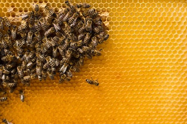 蜂とハニカム