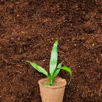 Вид сверху на растение