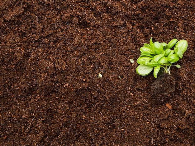 土の上から見た植物
