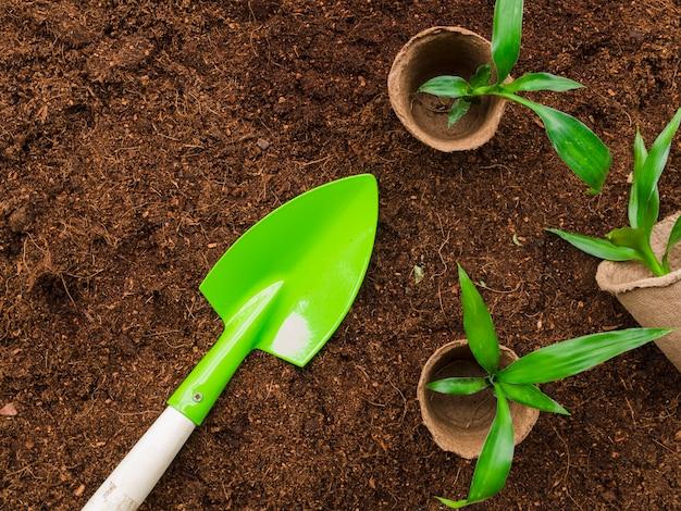 Вид сверху растения с лопатой