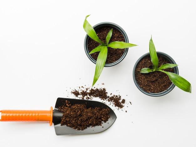 土でいっぱいのシャベルでトップビューの植物