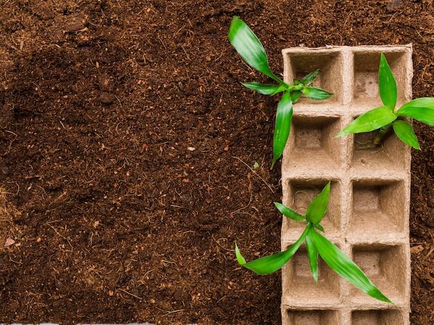 土壌上の平面図苗床