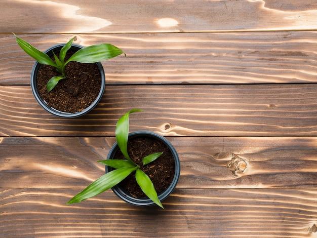 木製のテーブルトップビューの植物