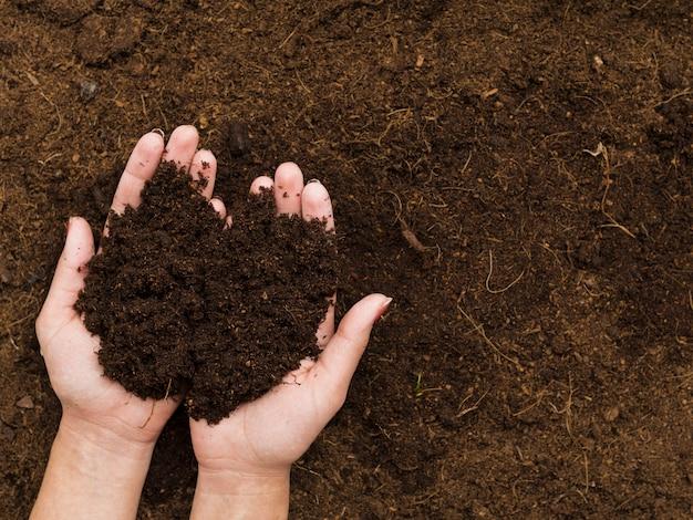 Вид сверху руки держат почву