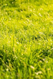 夏の緑の長い草