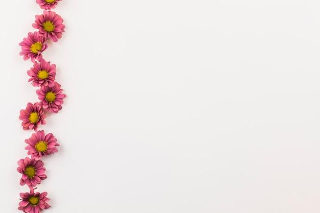 新鮮な花の上から見る