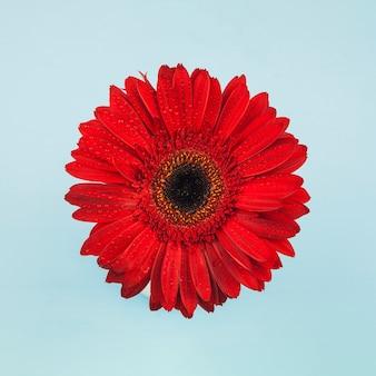 赤い花の上から見る