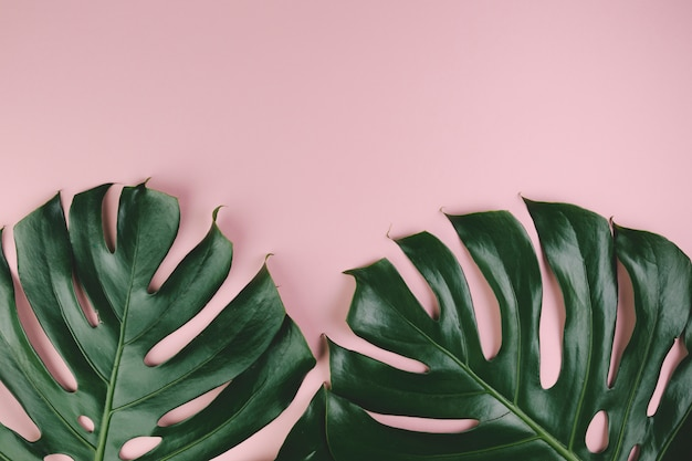 Вид сверху экзотических листьев