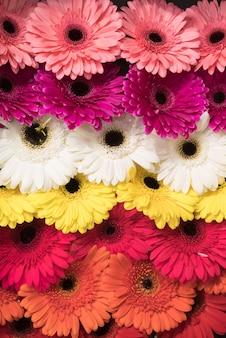 ピンクのフルフレーム。白;黄色とオレンジ色のガーベラの花の背景