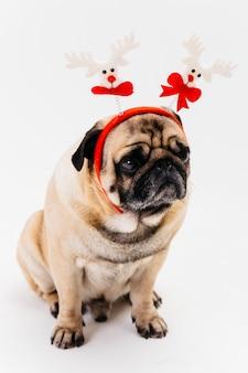 白と赤のヘッドバンドでかわいいクリスマスパグ