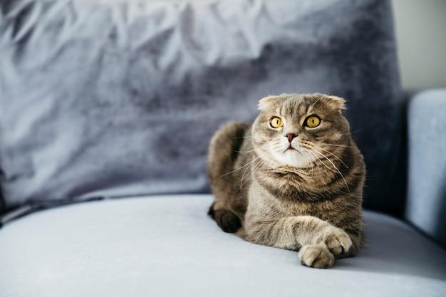 ソファの上に横たわる猫