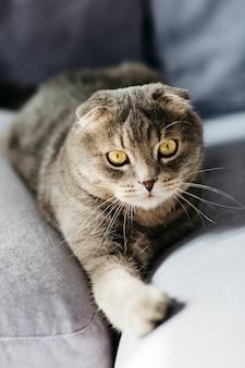 かわいい猫がソファに横になっています。