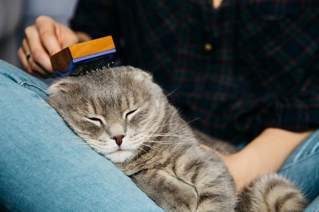 眠っている猫を梳く女性