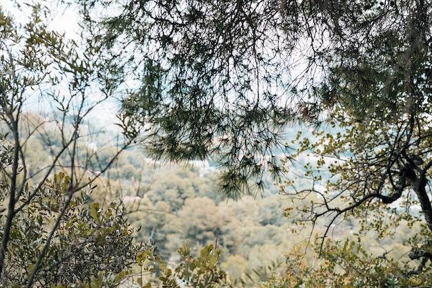 森の緑の木々