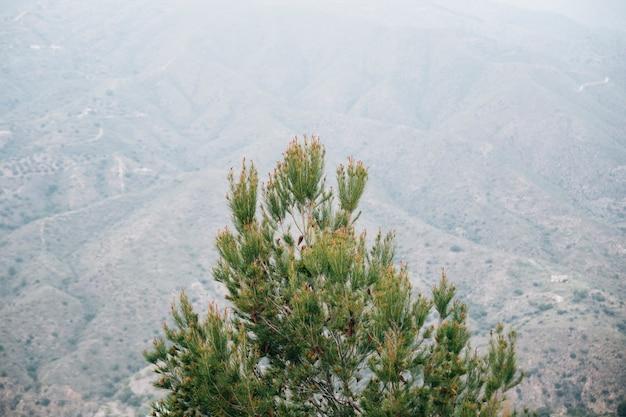 山の風景の前に松ぼっくりの木の高角度のビュー