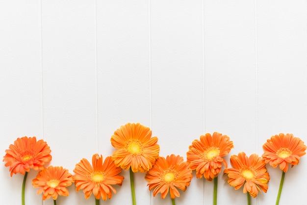 背景に装飾的なカラフルなデイジーの花