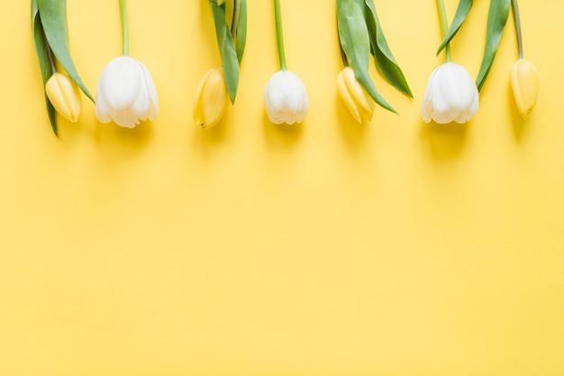 Декоративные красочные тюльпан цветы на фоне