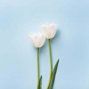 Декоративные тюльпаны на цветном фоне