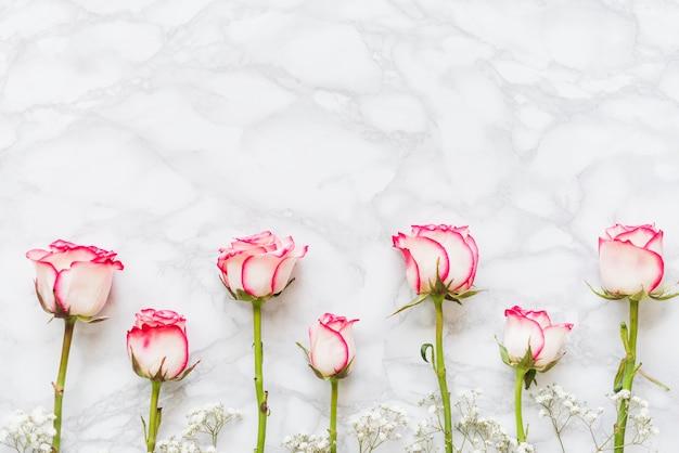 Декоративные разноцветные розы на фоне