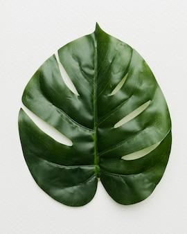 Пальмовый лист на белом фоне