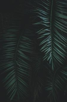 緑のエキゾチックな葉をクローズアップ
