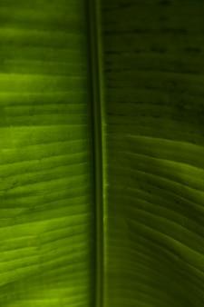 Зеленые экзотические листья крупным планом