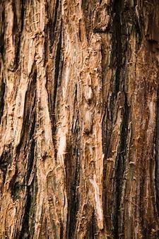 木の幹の質感をクローズアップ