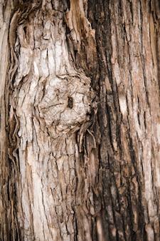Текстура ствола дерева крупным планом