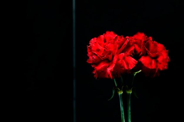 ガラスの上の赤いカーネーションの花の反射のクローズアップ