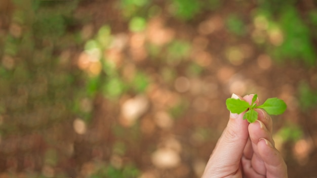 若い植物を持っている手