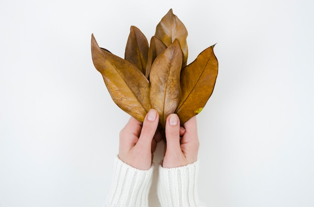 トップビュー両手秋の葉