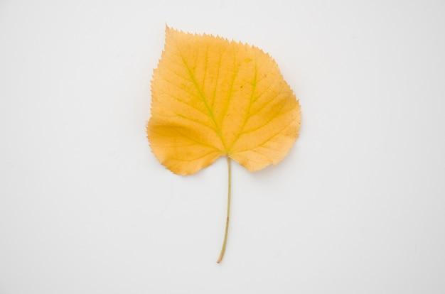 トップビュー黄色秋葉