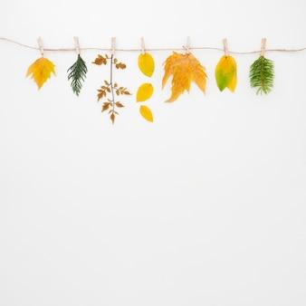 秋の紅葉フラットコピースペース