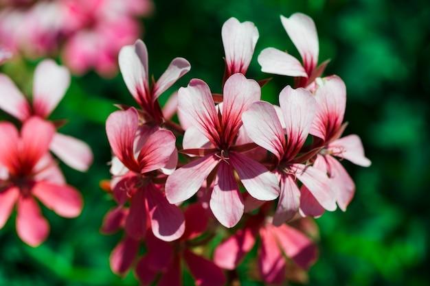 クローズアップの花のテクスチャ
