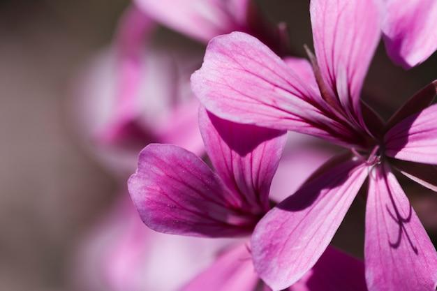 Текстура цветов крупным планом