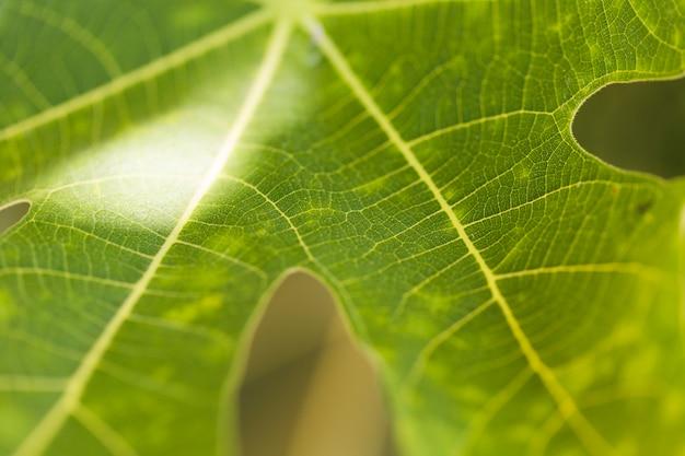 Текстура крупным планом растений