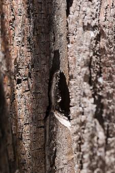 クローズアップの木の質感